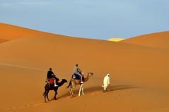 Y en la siguiente duna el sol. (Victoria.....a secas.) Tags: desierto marruecos camels dunas bereber sáhara camellos