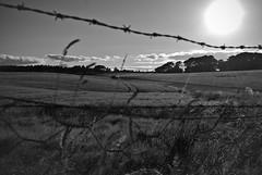Beyond the wire (frugilboy) Tags: sunset bw white black blanco digital atardecer scotland countryside reflex al wire nikon negro august escocia bn agosto campo dunnottar alambre d60 2013