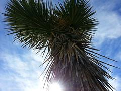 2013-12-01 12.20.24 (chadmagiera) Tags: california park family november winter nature outdoors nationalpark desert hiking joshuatree souther joshuatreenationalpark 2013 chadmagiera november2013