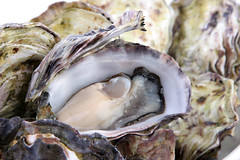 Oyster in shell (john white photos) Tags: ocean food natural shell fresh shellfish seafood oyster zinc royaltyfree vision:outdoor=0951
