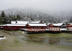 Snowy Miyajima Itsukushima shrine Worldheritage (h orihashi) Tags: japan shrine pentax hiroshima miyajima  worldheritage itsukushima     hatsukaichishi k5s pentaxk5s