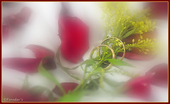 Rose and rings (VERODAR) Tags: red flower love rose nikon valentine rings nikond5000 verodar veronicasridar {vision}:{flower}=0587 {vision}:{plant}=0918