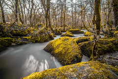 lichens_3794 (nalamanpics) Tags: longexposure nature water yellow landscape countryside woods shadows devon lichen dartmoor slowexposure ndfilter milkywater devoncountryside mygearandme mygearandmepremium mygearandmebronze mygearandmesilver mygearandmegold mygearandmeplatinum mygearandmediamond leebigstopper