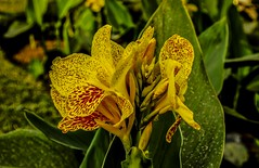Flower Power, Cuttack, Orissa, India (jpcastonguay) Tags: india orchid flower green nature yellow closeup side edge greenery sideview lowaperture vision:outdoor=0799 vision:plant=0967 vision:flower=0872
