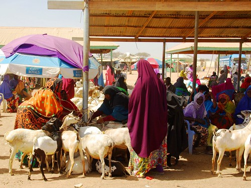 Burao livestock market
