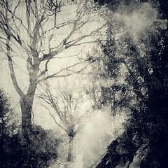 naked trees (kokorage) Tags: autumn winter tree square path herbst bume baum android weg pfad photoshopexpress snapseed flickrandroidapp:filter=none pixlrexpress kokorage vision:mountain=081 vision:outdoor=0957 vision:clouds=0757