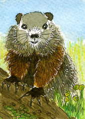 Woodchuck (juanita.red) Tags: woodchuck groundhog juanitarojas judybrick watercolor animal rodent