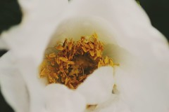 (winterprinzessin89) Tags: flowers blütenblatt blüte blumen blume plant pflanze photographie photography photografie photo fotografie outdoor nature natur nikon d3200 dslr