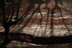 _DSC1434 (adrizufe) Tags: beechwood hayedo hojarasca deadleaves invierno windows zeanuri arratia nature naturaleza bizkaia visiteuskadi adrizufe adrianzubia aplusphoto ilovenature basquecountry shadows