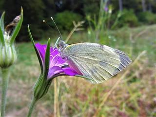 Butterfly 1206