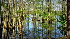 Reflections (Suzanham) Tags: reflections swamp cypress trees water lake canonpowershotsx60hs mississippi noxubeewildliferefuge waterscape