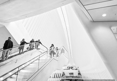 Oculus (mhoffman1) Tags: oony2016 manhattan nyc newyork santiagocalatrava sonyalpha wtc a7r architecture blackandwhite ceiling lines minimalism monochrome oculus