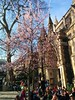 crowded church (ozlemkutlu) Tags: church tree spring people crowd london boroughmarket londonbridge eat sunny niceweather nofilter peopleoflondon kilise insanlar kalabalık ağaç ilkbahar bahar frühling güzelhavalar
