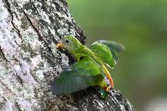 _5009846 (K S Kong) Tags: nikonafs200500mmf56e parrot