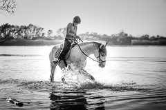 Horsefun (donomar80) Tags: fun fluss landschaft spritzer nature water splash natur light spass sea see sw river weiss schwarz bw black wasser pferd horse tag white