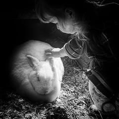 The Easter Bunny - White Rabbit (jbarc in BC) Tags: easter bunny rabbit farm maplewoodfarm pettingzoo bw shadows pinhole whiterabbit
