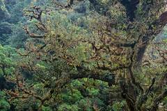 Jardín Natural (Jorge De Silva R) Tags: chiapasmexico jorgesilva reserva de la biosfera el triunfo nature legado verde