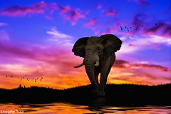 Wherever you go, (gusdiaz) Tags: photoshop photomanipulatiion digita art arte elefante elephant reflection sunset sunrise amanecer atardecer agua water foliage grass vegetacion pasto colorful colorido happy alegre artisitico artistic composite composicion
