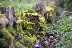 The forgotten garden (AdaMoorePhotography) Tags: nikon d7200 105mm 105mmf28 wall garden nature natural woods