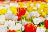 Tulip Festival Istanbul (NATIONAL SUGRAPHIC) Tags: türkiye yenitürkiye newturkei turkei naturephotography doğafotoğrafçılığı mothernature annedoğa fairytales istanbul tulips laleler türkiyeninlaleleri tulipsofturkei tulipland flowers çiçekler ayhançakar nationalsugraphic sugraphic gülhane gülhanepark sultanahmet orange turuncu