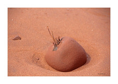 Tombé de l'arbre / Fallen from the tree (deplour) Tags: roche algue sable rock alga seaweed sand