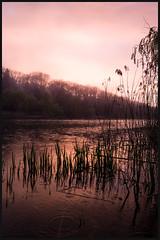 Blooming sky (Jean-David & Anne-Laure) Tags: 28mm blossom cherry color flowers fog highpark leica leicaq pond rain sprint sunset toronto tree warm wideangle