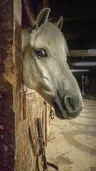 Hay! Err... I mean Hey! (KWPashuk) Tags: samsung galaxy note5 lightroom kwpashuk kevinpashuk horse barn watching friendly ironhorse stables oakville ontario canada