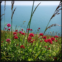 2014-06-22-0110.jpg (Fotorob) Tags: water engeland kust planten isleofwight england freshwater