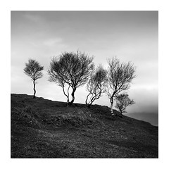 Perfect Moments (richieJ 11) Tags: birch trees isleofskye elgol scotland clump hill square monoblackandwhite
