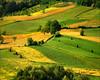 Fields (Katarina 2353) Tags: serbia katarina2353 katarinastefanovic