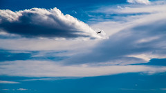 092/365 - Fly-by (laureanophoto) Tags: project3652017 silhouette plane blue sky daylight flyby aircraft 365 clouds landing