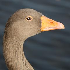 251 (AO'Brien) Tags: arklow wicklow autumn birds