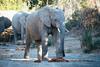 Kuzuko Elephant Pack I