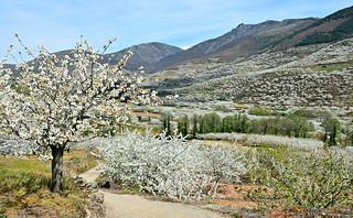 Valle del Jerte 28