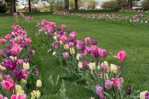 Volčji Potok Arboretum