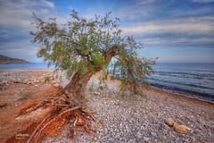 (209/17) Coraje (Pablo Arias) Tags: pabloarias photoshop photomatix nxd españa cielo nubes arena playa mar agua mediterráneo árbol piedras deltorres villajoyosa alicante comunidadvalenciana