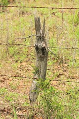 Been Here Too Long (sgbrown56) Tags: fence fencepost tree barbedwirefence grown face sadface country