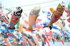 KOINOBORI (Teruhide Tomori) Tags: 大谷川鯉のぼりフェスティバル こいのぼり 珠洲 奥能登 能登半島 石川県 日本 伝統行事 event ishikawa suzu japan japon festival koinobori tradition