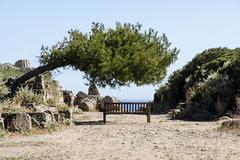 Sicilia_10 de mayo de 2012_132 (kiarras) Tags: arbol tree banco bench sombra shadow mar sea azul horizonte horizont