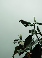Before The Storm (Sassy Unicorn Photography) Tags: nature sky dark muted cloudy mood tree magnolia spring rain minimalism