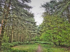 Following the path (andystones64) Tags: nature reserve messingham trees woodland leaves pathway cloud sky