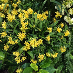 2017-03-14_9964i_waldor (lblanchard) Tags: 2017flowershow displaygarden waldor