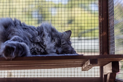Merlin (cupra1) Tags: cathouse furkid meowmanor merlin cat cattower pets 2017 canon5d 5d