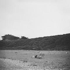 Sneaky Seagull (Chelsea Branch) Tags: filmisnotdead staybrokeshootfilm 35mm 120mm ilfordpanfplus50 ilford ilfordpanf california lubitel166b lubitell166b landscape seascape grainisgood blackandwhite