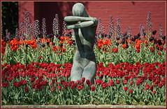 Geblendete Schönheit ... (Kindergartenkinder) Tags: dolls grugapark essen gruga frühling tulpen blüte persischeglockenlilie