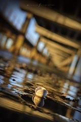 reflejos en Caleta Córdova (Mauro Esains) Tags: muelle caleta córdoba comodoro rivadavia chubut patagonia playa costa golfo san jorge mar océano agua reflejos columnas atardecer paseo restinga pesca dock beach coast gulf saint george sea ocean water reflexes columns sunset walk fishing runway horizon