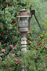 Lights 'n ladder (Catstoy64) Tags: lights ladder green trees leaves garden flowers rustic