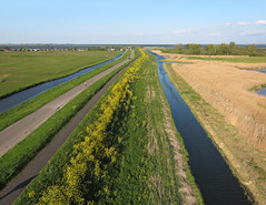 Durgerdam-IJsselmeerdijk (2) (de kist) Tags: kap nederland thenetherlands waterland ijsselmeer ijsselmeerdijk dijk dyke durgerdam flora raapzaad turnip turniprape brassicarapa ijdoorn luchtfotografie aerialphotography
