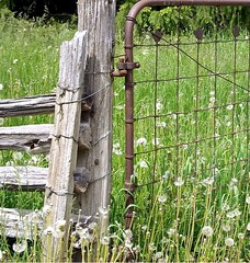 HFF...   ~  Country Fences  ..... (~ Cindy~) Tags: fences splitrail chainlink weeds dandelions grass friday fence happy 2017 march tennessee crossville county cumberland hff
