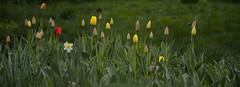 flowers in the garden 3 (intui.pro) Tags: flower flowers flowering blossom plant grass grassland nature green